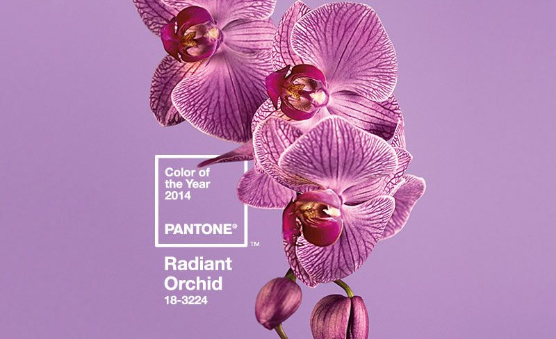 Color Pantone Orquídea radiante, el color estrella esta temporada